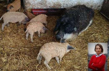 Insights into dilemmas associated with the EU farm animal welfare reform-effort.