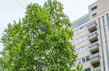 Damjanich utca Dormitory