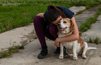 Secure owners – calm dogs?