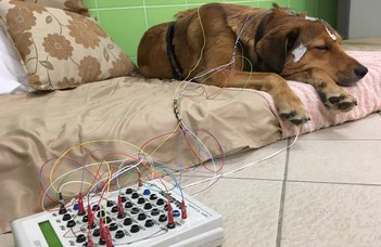 How age and sex are reflected in the sleeping dog's brain?