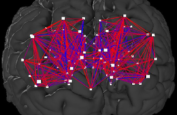 Az agyi kapcsolatok fejlődésének dinamikája