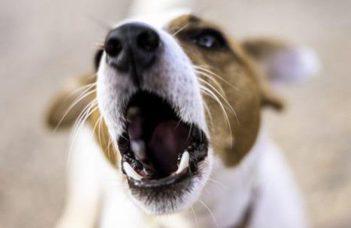 Ki az ijesztőbb a kutya számára: egy férfi vagy egy nő?