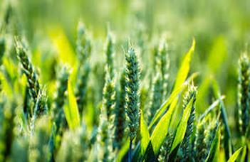 Új kutatóműhely a fenntartható mezőgazdaságért
