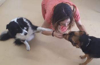Kutyáknál is felbukkan a zöld szemű szörny?