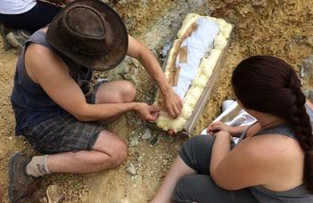 Szenzációs dinoszauruszfelfedezés a Bakonyban