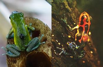 Azonos evolúciós genetikai folyamatok vezettek a monogámiához (Origo.hu)