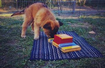 A gazdi engedékenysége a kutya szorongásához vezethet (NLcafe.hu)