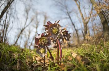 Projekt a veszélyeztetett növényfajok fennmaradásáért