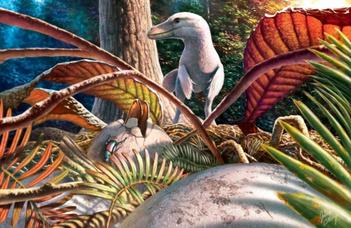 Az első hazai dinoszaurusztojás-leletek