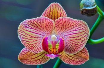 Orchideák és rovarfogók