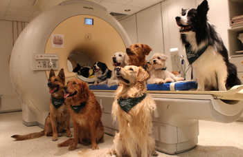 IV. Kutyaetológiai Konferencia
