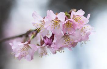 A botanikus kert hagyományos tavaszi rendezvényére a családokat is várják.