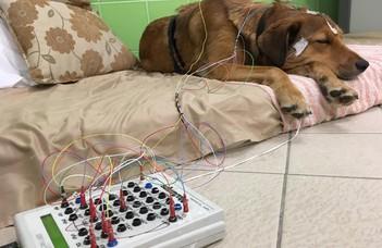 Miben hasonlít az alvó kutyák agyának működése az emberéhez?