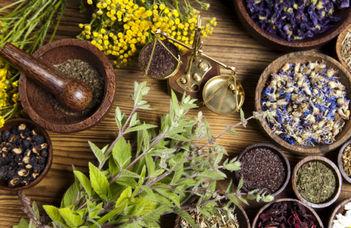 Gyógynövény-ismereti tanfolyam