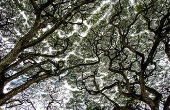 A lombkorona megvédi az erdő élőlényeit (Tudománypláza.hu)