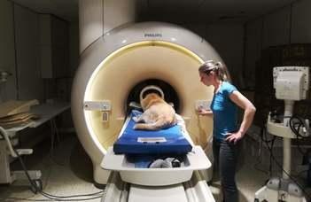 A kutyák agya sohasem pihen