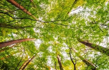 A fák csökkentik a globális felmelegedés hatását