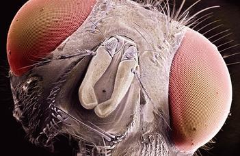 ELTE-s oktatók mikroszkóppal készített fotóiból nyílik kiállítás a Természettudományi Múzeumban.