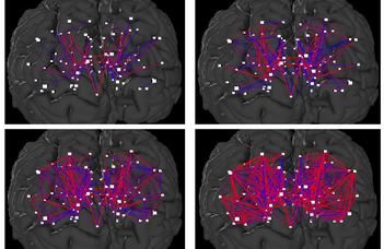 Újabb lépés az agy fejlődésének feltárásában