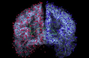 Pszichológiai sajátosságok és agyi struktúrák