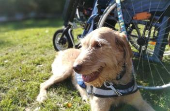 A tapasztaltabb kutyák kitartóbbak a feladatmegoldásban