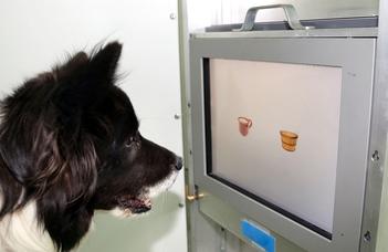 Agytorna idős kutyáknak