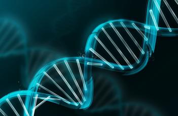 Eltérő DNS-szakaszok kínai és európai emberek bélflórájában