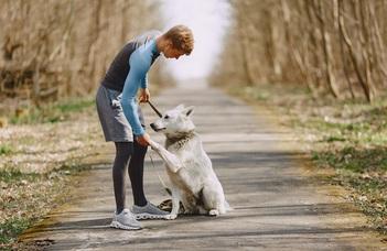 Így értik meg a kutyák az emberi beszédet