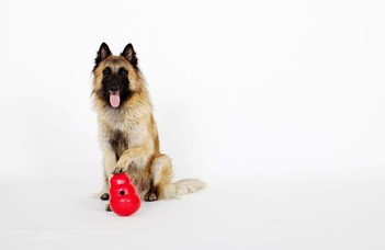 Tudják a kutyák, mire gondol az ember?