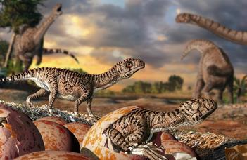 Miről árulkodik a legidősebb dinoszaurusztojások héjszerkezete?