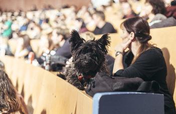 VI. Kutyaetológiai Konferencia