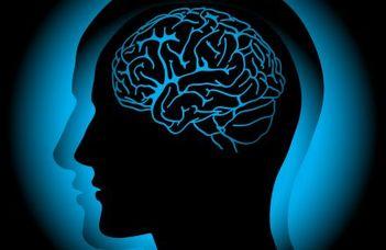 Hogy működhet igazából az emberi agy idegsejthálózata? (Qubit.hu)