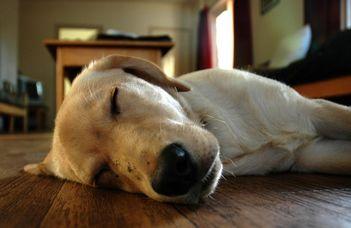 Alvás és tanulás kutyamódra