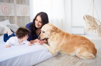 Házikedvencek hatása az anyaságra