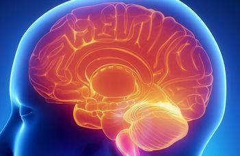 Az Alzheimer- és a Parkinson-kór gyógyíthatóságáért (Magyar Narancs)
