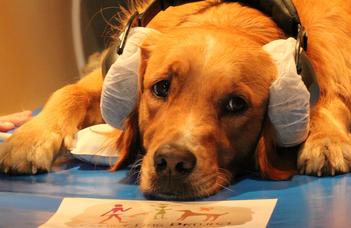 A kutyák agya képes feldolgozni, hogy mit mondunk, és hogyan mondjuk
