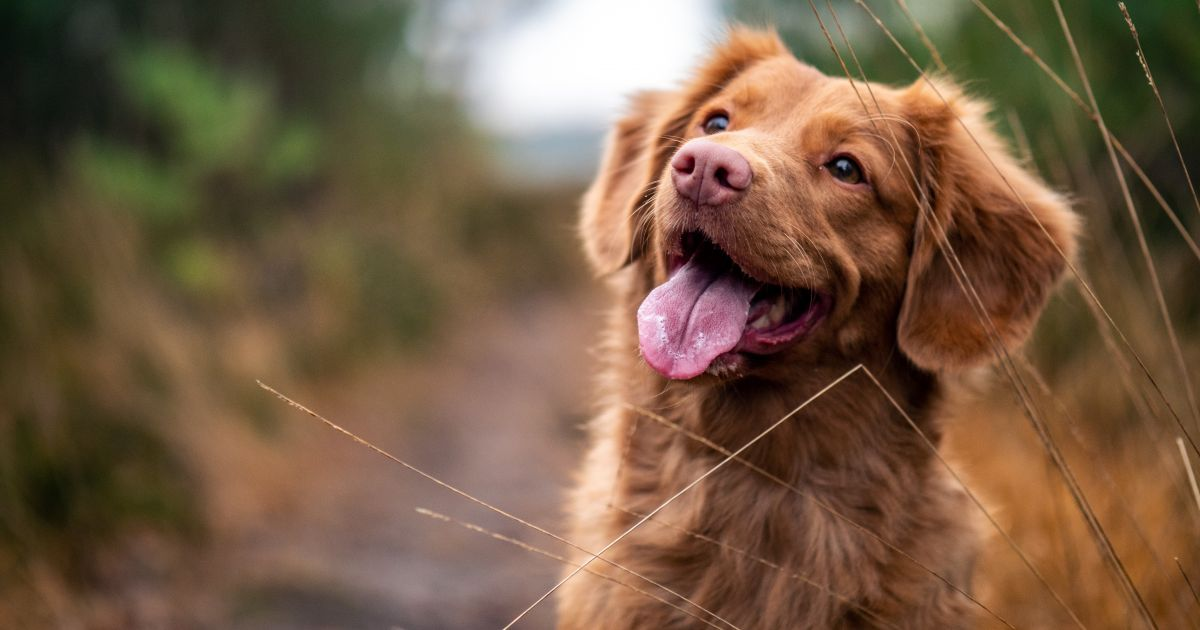 kutyát figyelt a fogbetegségek mentális okai