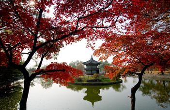 Fókuszban a koreai nyelv