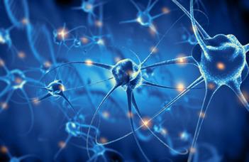 Új felfedezés az idegrendszeri fejlődési rendellenességek megértésében