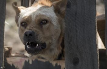 Miért olyan szörnyen idegesítő a kutyaugatás? (Index.hu)