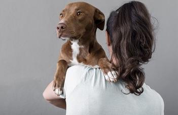 Hogyan látják egymást a kutyák és az emberek?