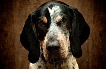 Mire képes a kutyák epizodikus-jellegű memóriája?