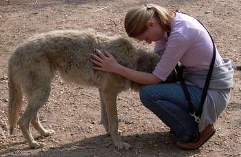 Ember és farkas barátsága?