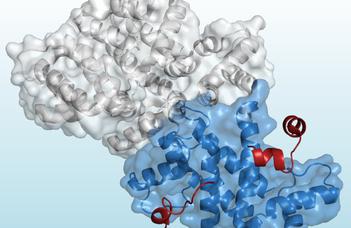 Új módszer a fehérjék szerkezetkutatásában